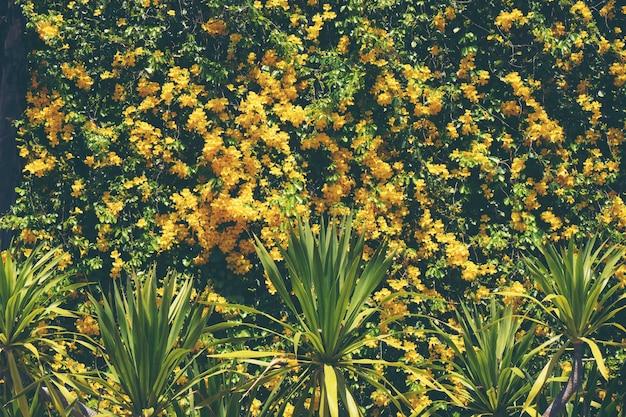 Coucher de soleil fleur tropicale