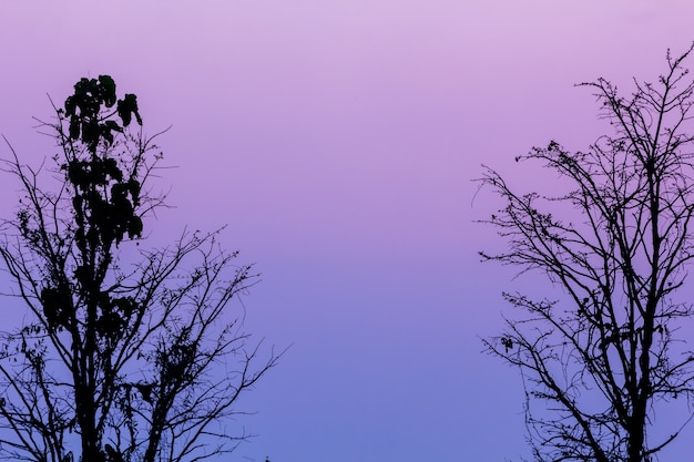 Coucher de soleil fond avec des silhouettes d'arbres servant d'illustrations