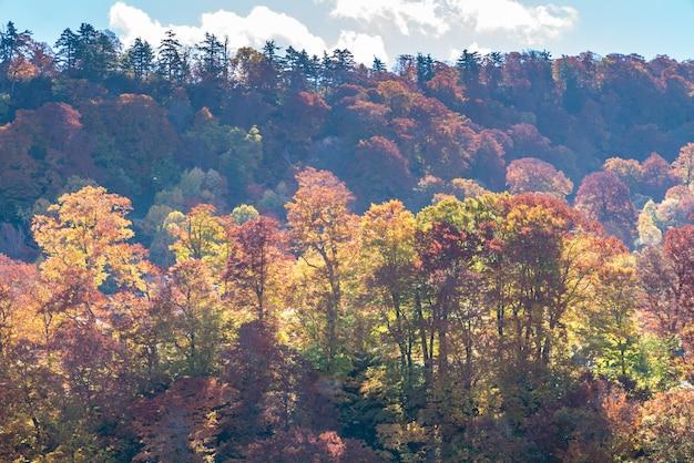 Coucher de soleil forêt automne akita japon