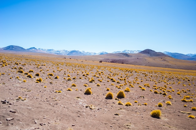 Coucher de soleil sur les hauts plateaux andins désertiques, sud de la bolivie