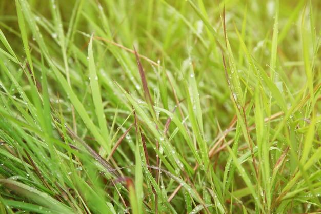 Coucher de soleil sur l'herbe verte