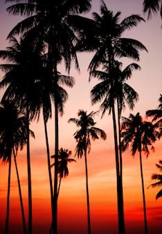 Coucher de soleil sur une île tropicale