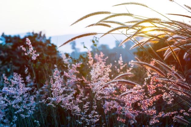 Coucher de soleil avec lumière chaude et herbe fleurie