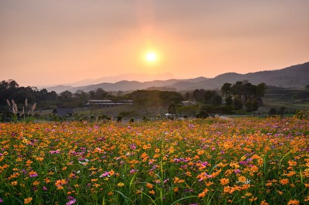 Coucher de soleil sur la montagne avec cosmos en fleurs