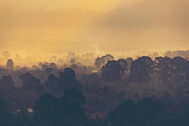 Coucher de soleil sur la montagne, vue sur la forêt