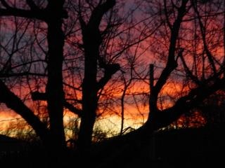 Coucher de soleil de l'oklahoma, arbres