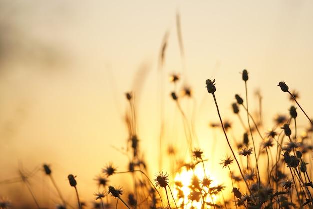 Coucher de soleil orange clair avec de l'herbe sur le côté de la route.