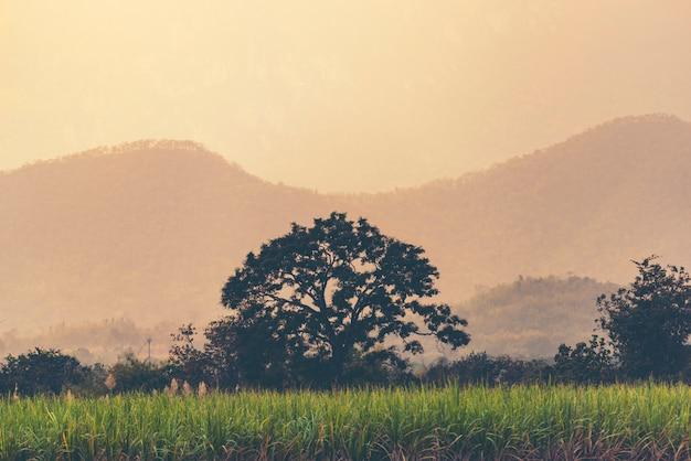 Coucher de soleil orange et jaune avec des silhouettes de montagnes