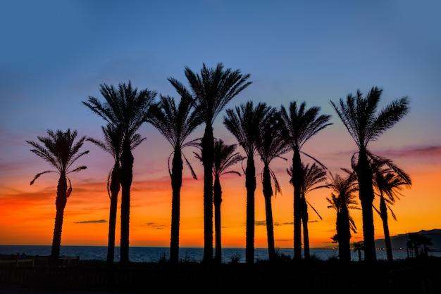 Coucher de soleil sur le palmier almeria cabo de gata retamar