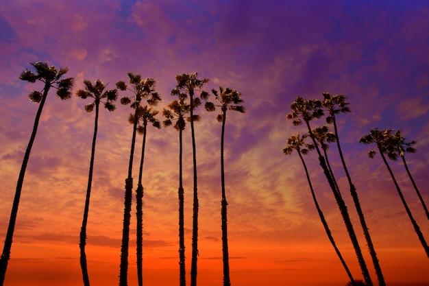 Coucher de soleil palmiers en californie avec ciel coloré