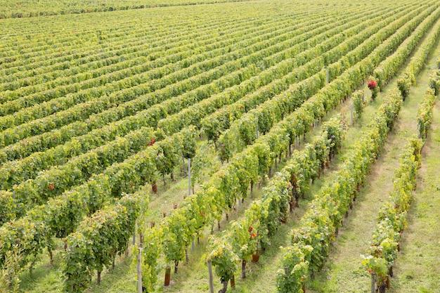 Coucher de soleil, paysage, vignoble de bordeaux, france europe