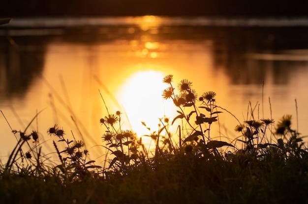 Coucher de soleil pittoresque sur la rivière, fleurs sur la rive et reflet du soleil dans l'eau