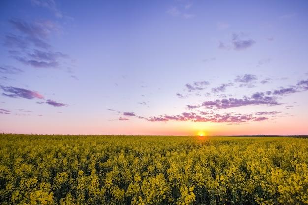 Coucher de soleil pittoresque sur le terrain avec viol