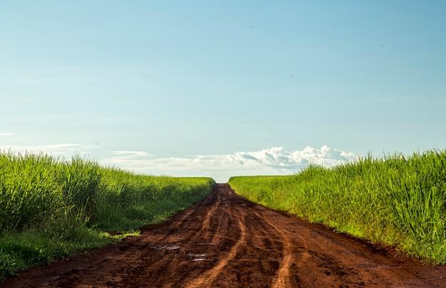 Coucher de soleil sur la plantation de canne à sucre