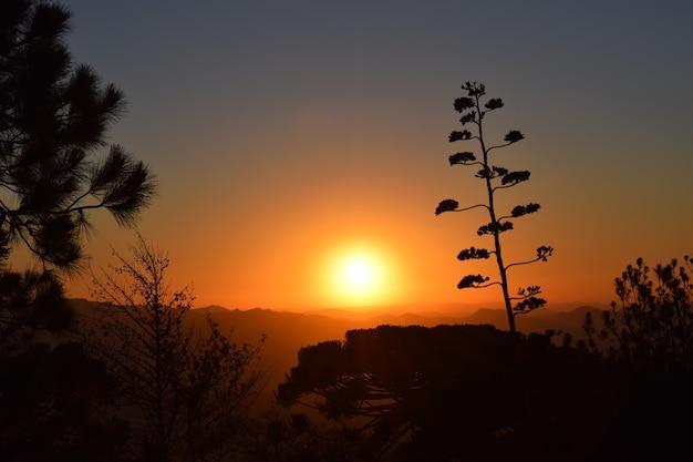 Coucher de soleil avec la silhouette des arbres