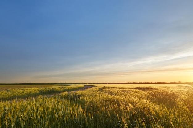 Coucher de soleil sur le terrain, champs de paysage rural agricole de l'ukraine