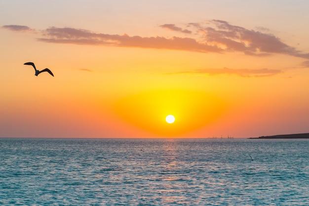 Coucher de soleil tropical sur la plage. australie, vincentia.