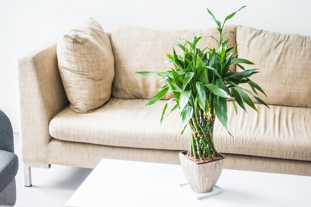 Couchs avec une plante au milieu sur une table