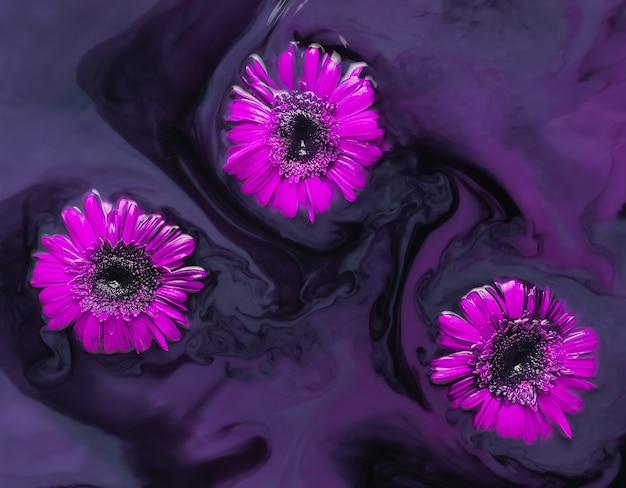 Couler des gerberas rouges dans de l'eau colorée