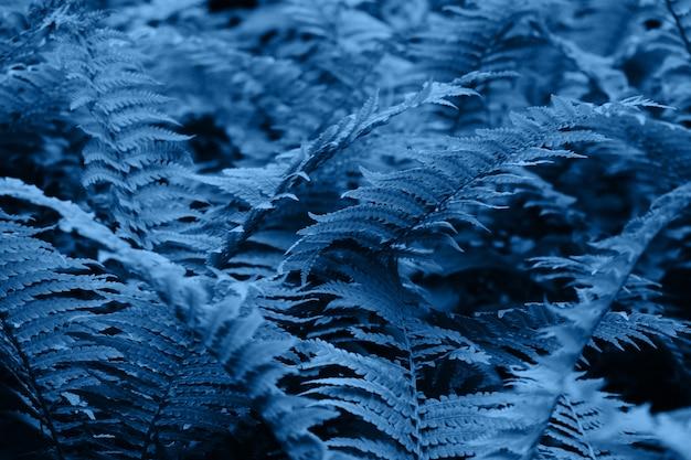 Couleur de l'année 2020 - bleu classique. fougère dans la forêt. fond naturel