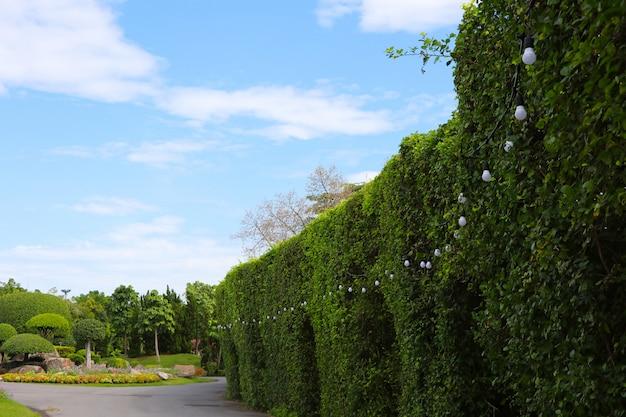Couleur blanche lumières électriques décorer sur l'arbre dans le parc et fond de ciel bleu