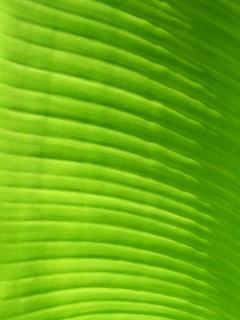 La couleur des feuilles