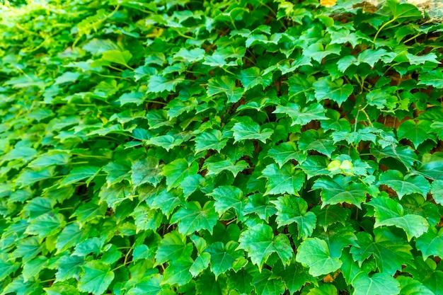 Couleur herbe floral ressort paisible en plein air