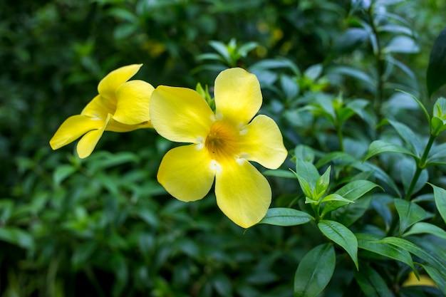 Couleur jaune trompette doré