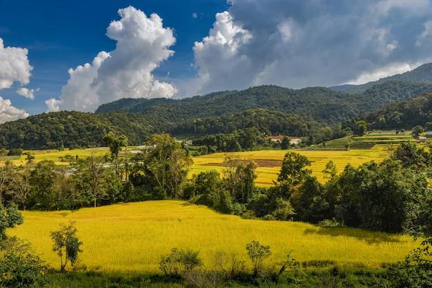 Couleur or du champ de rizières en terrasses en vue sur la montagne avec ciel bleu et nuages.