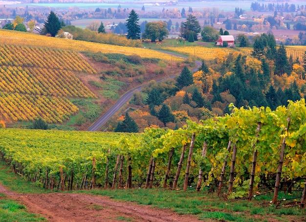 Couleurs d'automne dans le vignoble de knutsen