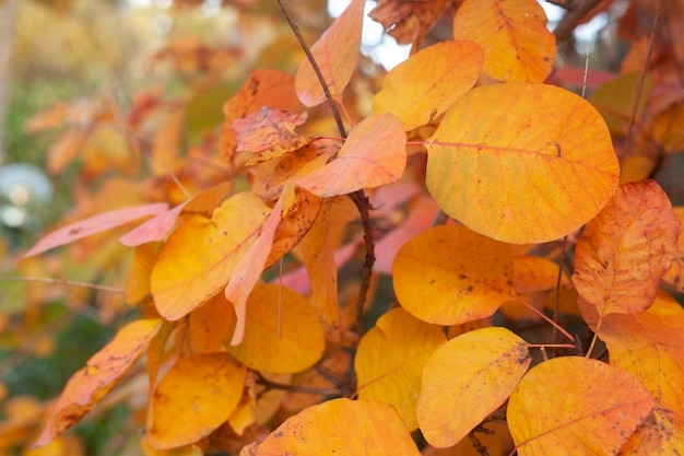 Couleurs vives de la forêt d'automne