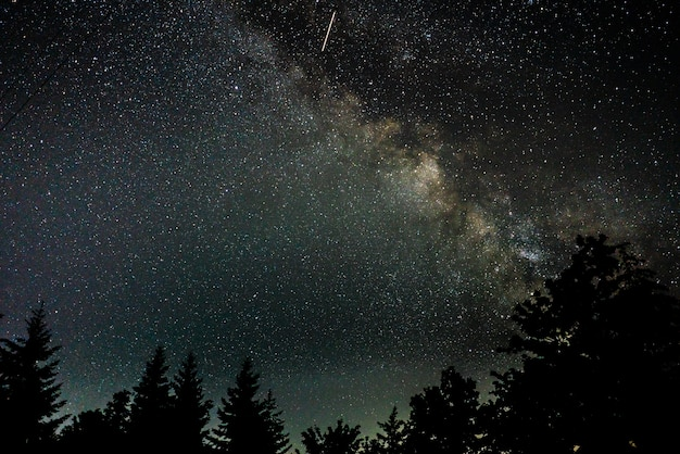 Coup de belle silhouette d'arbres sous un ciel étoilé
