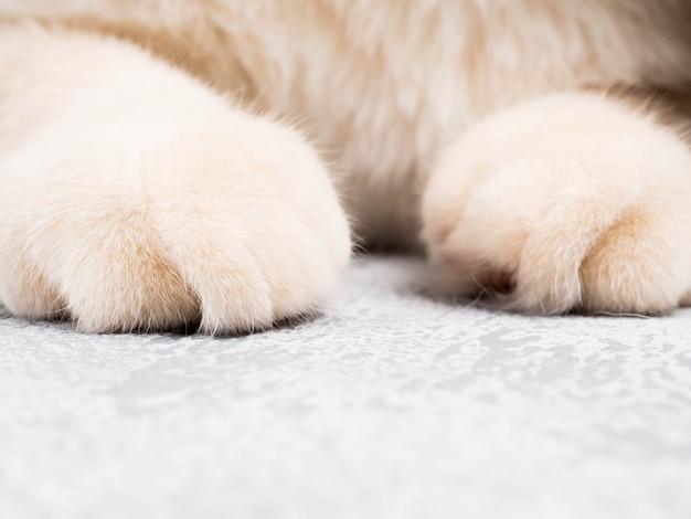 Coup de détail de pattes de chat doux assis sur la table, agrandi de chat visage mignon rouge