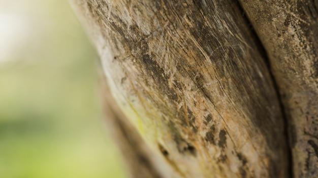 Coup de détail de tronc d'arbre