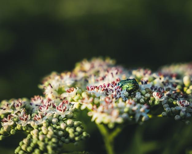 Coup de focus peu profond de fleurs