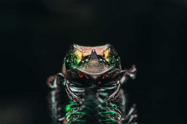 Coup de macro du coléoptère coloré exotique