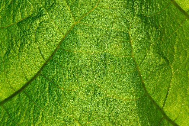 Coup de macro de feuille verte