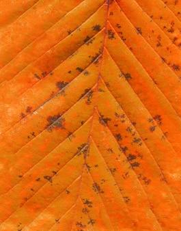 Coup de macro de feuilles pour la texture. concept minimal posé à plat