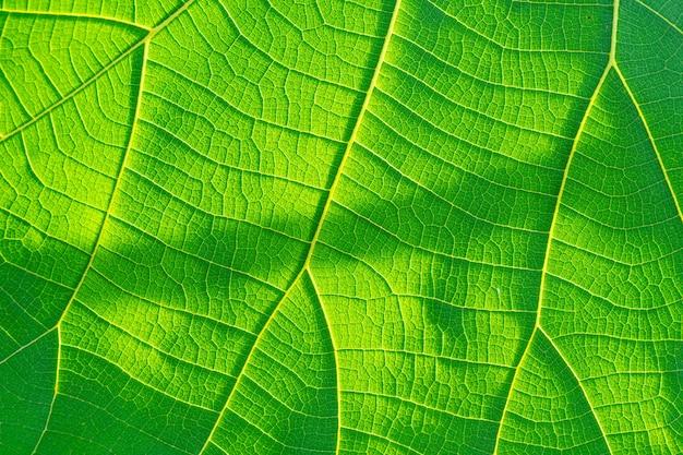 Coup de macro. fond de texture de feuille verte.