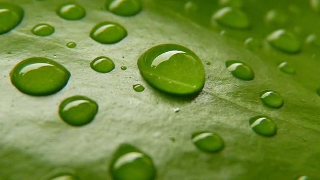 Coup de macro de gouttes d'eau sur une feuille verte