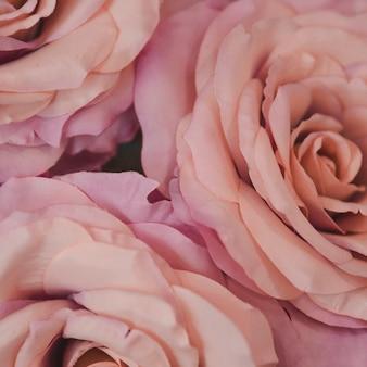 Coup de macro de roses tendres roses