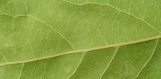 Coup de macro de la texture de la feuille de laurier sèche. fermer