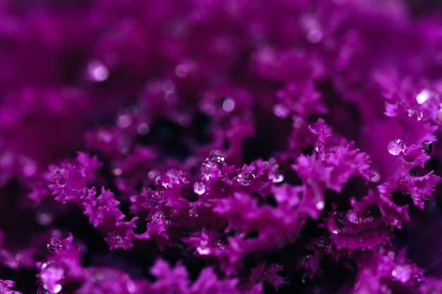 Coup de mise au point sélective d'alyssum en fleurs