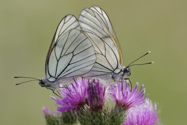 Coup de mise au point sélective de deux beaux papillons assis sur une fleur rose exotique