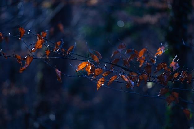 Coup de mise au point sélective de feuilles brunes sur une branche d'arbre dans le parc maksimir à zagreb, croatie