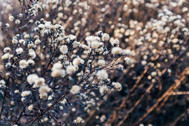 Coup de mise au point sélective de fleurs blanches sèches sur une branche avec un arrière-plan flou