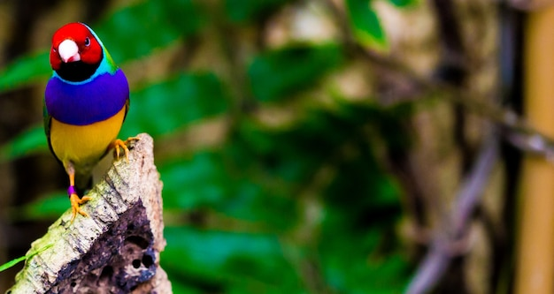 Coup de mise au point sélective d'un perroquet coloré dans la nature