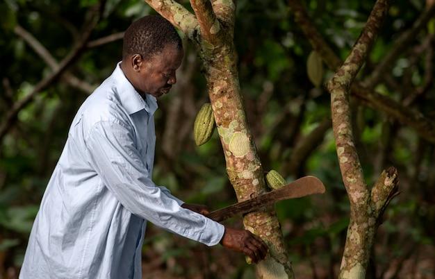 Coup moyen homme coupant l'arbre