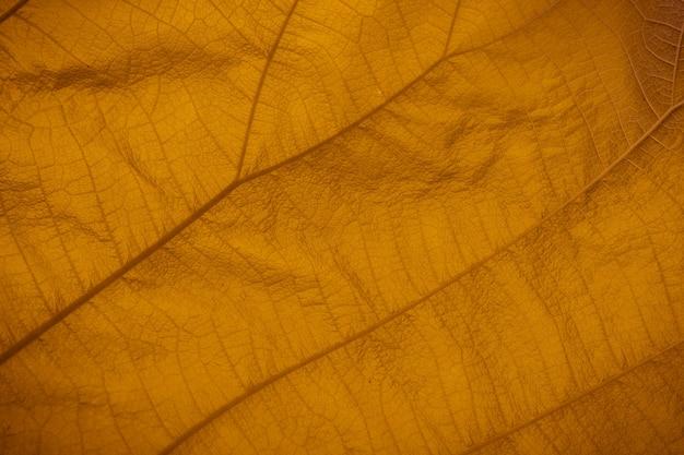 Coup de plein cadre de la texture des feuilles jaunes.