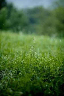 Coup vertical de fleurs sur l'herbe verte